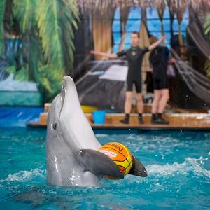 Дельфинарии, океанариумы Матвеева Кургана