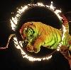 Цирки в Матвеевом Кургане