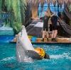 Дельфинарии, океанариумы в Матвеевом Кургане